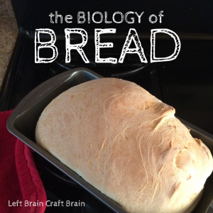 Biology of Bread Left Brain Craft Brain FB