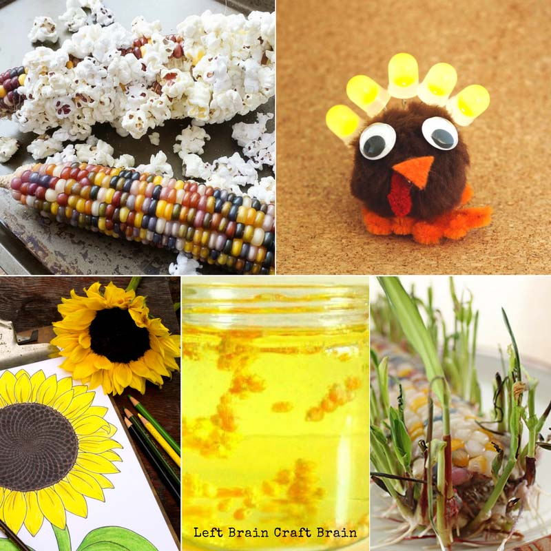 Fall STEAM Activities for Kids