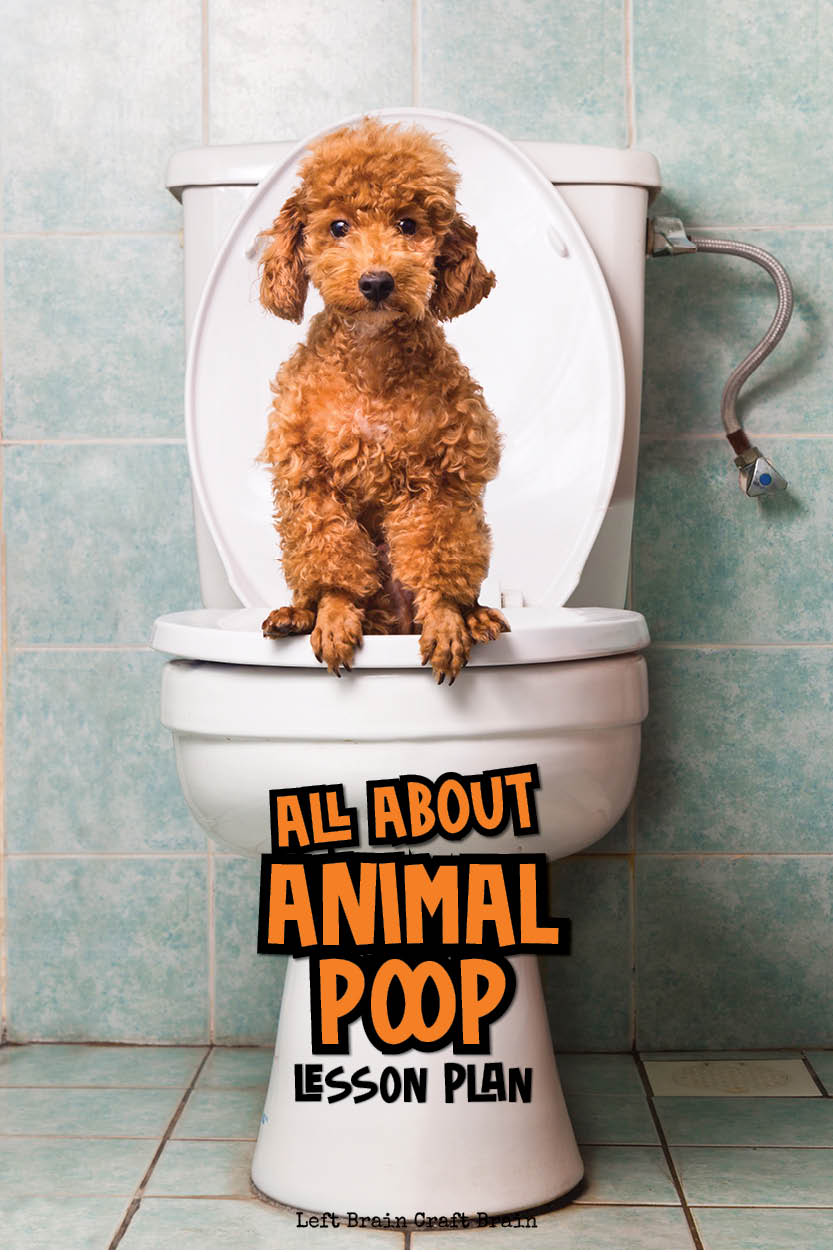 Explore the science of poop with this fun lesson plan for kids. Read, play, and cook delicious no-bake cookies to learn about how animal scat differs between animals. It's gross, but cool science that kids will love! Perfect for scouts, school, homeschool, and more.