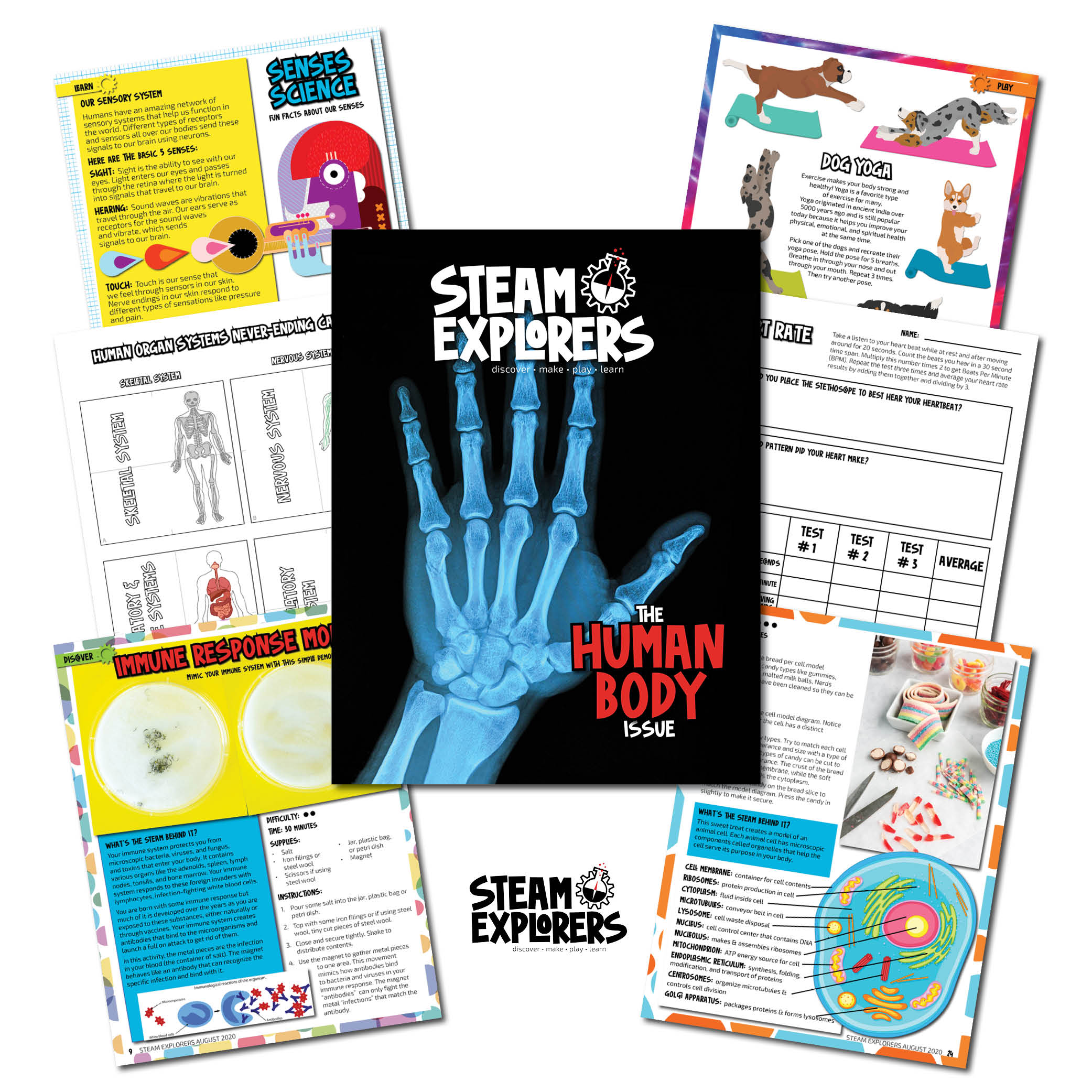 STEAM Explorers - Human Body - Cover Collage